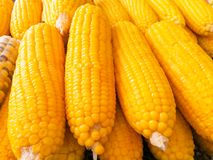 Boil corn on the steel tray, Thailand. Boil. Color, yellow royalty free stock photo