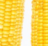 Boil corn. On white background stock photos