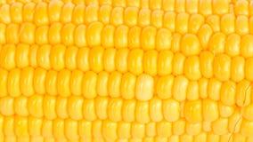 Boil corn. On white background stock images