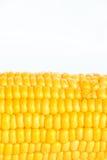 Boil corn. On white background stock image