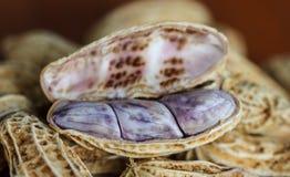 Boil peanut on wood. CloseUp of boil peanut on wood background stock photo