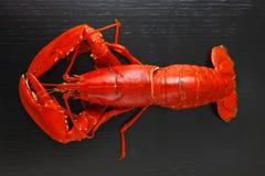 Boiled大西洋龙虾顶视图  免版税库存图片