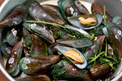 Boiled Asian green mussel, Perna viridis Royalty Free Stock Photos