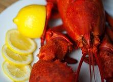 Boiled Atlantic Lobster Stock Photos