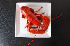 Boiled Atlantic Lobster on white plate Stock Photography