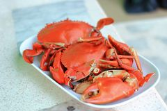 Boiled back crab Royalty Free Stock Photos