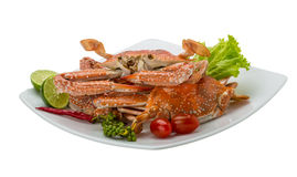 Boiled blue crab Stock Photography