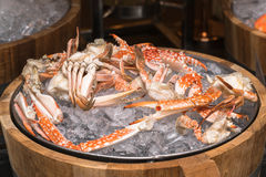 Boiled blue crab on ice Royalty Free Stock Photo