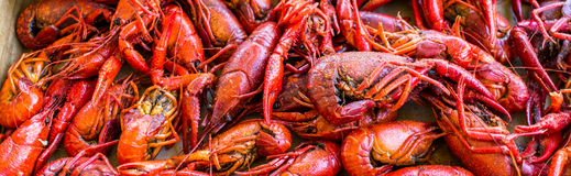 Boiled Cajun Crawfish ready for consumption Stock Photo