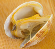 Boiled clam Royalty Free Stock Photo