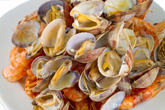 Boiled clams Stock Images
