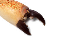 Boiled claw crab at corner with copy space Stock Photo