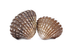 Boiled cockles or scallop isolated on white background Royalty Free Stock Photography