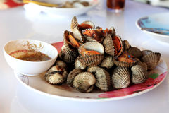 Boiled cockles or scallop Stock Image