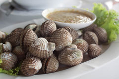Boiled cockles or scallop with seafood sauce. Fresh Shellfish Blood Cockles market edible background Royalty Free Stock Photography