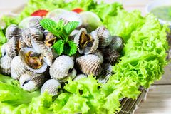 boiled cockles served with vegetable Stock Images