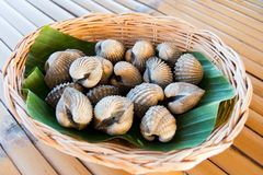 Boiled cockles Royalty Free Stock Photos