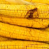 Boiled corn on an aluminum tray. Corn near. Closeup of corn. Yellow boiled young corn, useful and tasty. Food royalty free stock images