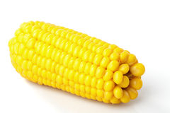 Boiled corn cob Stock Photography