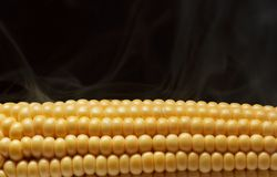 Boiled corn cob. Isolated on black background Stock Images
