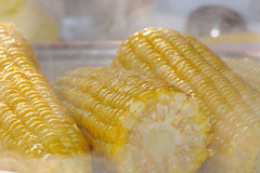Boiled corn Stock Images