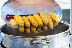 Boiled corn Royalty Free Stock Image