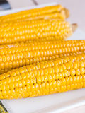Boiled corn on the cob with salt Royalty Free Stock Photography