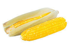 Boiled corn cobs Royalty Free Stock Images