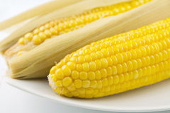 Boiled corn cobs Stock Image