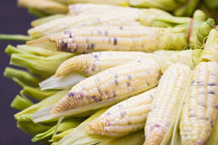Boiled Corn. Royalty Free Stock Images