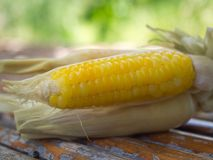 Boiled corn.It has sweet taste. Royalty Free Stock Images