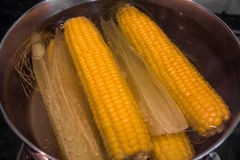 Boiled corn in hot water Royalty Free Stock Photo