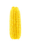 Boiled corn isolated on the white background Royalty Free Stock Images