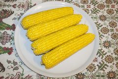 Boiled corn mays on a white plate Royalty Free Stock Images