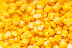 Boiled corn seeds Royalty Free Stock Image