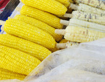 Boiled corns Royalty Free Stock Images