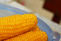 Boiled corns. Some piece of boiled corns - close up photography Royalty Free Stock Photos