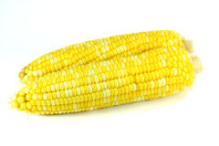 Boiled corns. On white background Stock Images