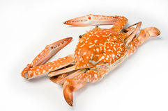 Boiled crab Royalty Free Stock Photo
