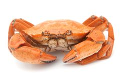 Boiled crab Stock Photography