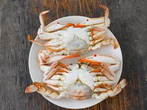 Boiled crab. In white plate on wood surface Stock Image