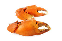Boiled crab claw Stock Images