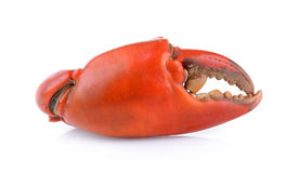 Boiled crab claws isolated Royalty Free Stock Image