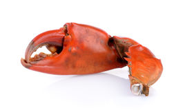Boiled crab claws isolated Stock Photo