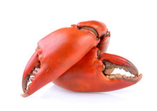 Boiled crab claws Royalty Free Stock Images