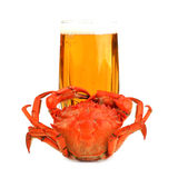 Boiled crab and glass of beer on white Royalty Free Stock Image