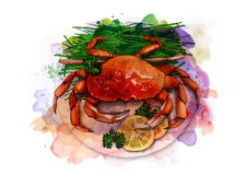 Boiled crab on a plate with fresh herbs and lemon slices, sketch. Boiled crab on a white plate with fresh herbs and lemon slices, sketch Royalty Free Stock Image