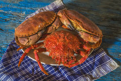 Boiled crab and spider crab Royalty Free Stock Images
