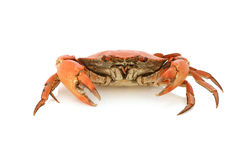 Boiled crab Royalty Free Stock Images