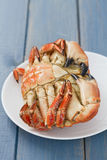 Boiled crab on white plate Stock Photos